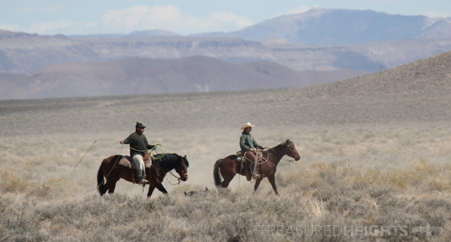 900-IMG_4062-Cowboys
